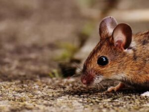 Wave Jet Florida Delray Beach Rodents Control Services